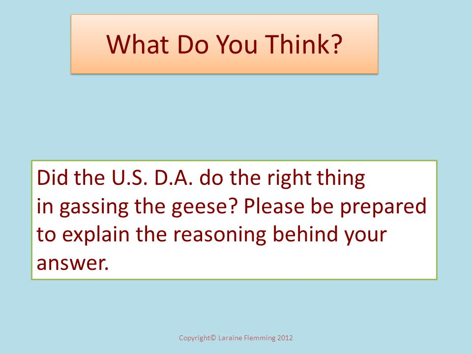 What Do You Think? Copyright© Laraine Flemming 2012 Did the U.S. D.A. do the right thing in gassing the geese? Please be prepared to explain the reaso