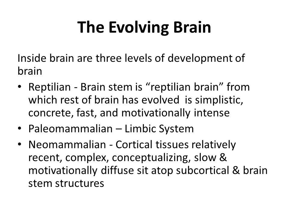 The Evolving Brain Inside brain are three levels of development of brain Reptilian - Brain stem is reptilian brain from which rest of brain has evolve