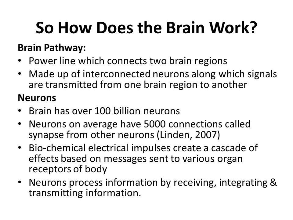 So How Does the Brain Work? Brain Pathway: Power line which connects two brain regions Made up of interconnected neurons along which signals are trans
