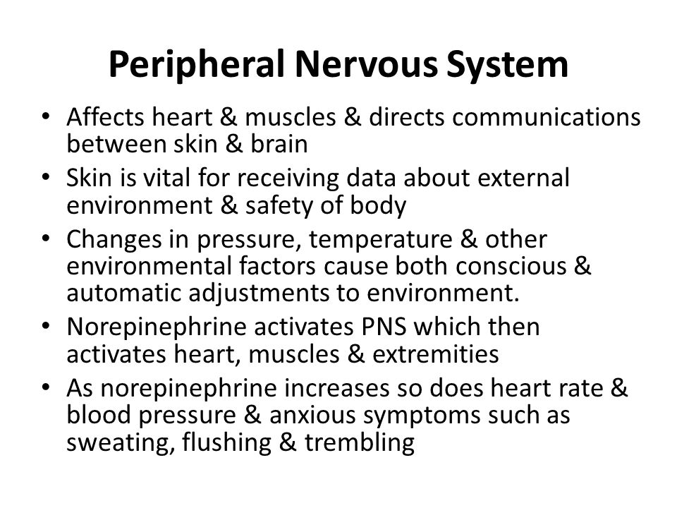 Peripheral Nervous System Affects heart & muscles & directs communications between skin & brain Skin is vital for receiving data about external enviro