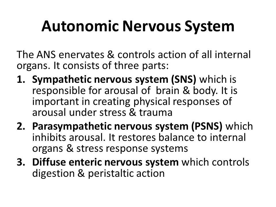 Autonomic Nervous System The ANS enervates & controls action of all internal organs. It consists of three parts: 1.Sympathetic nervous system (SNS) wh