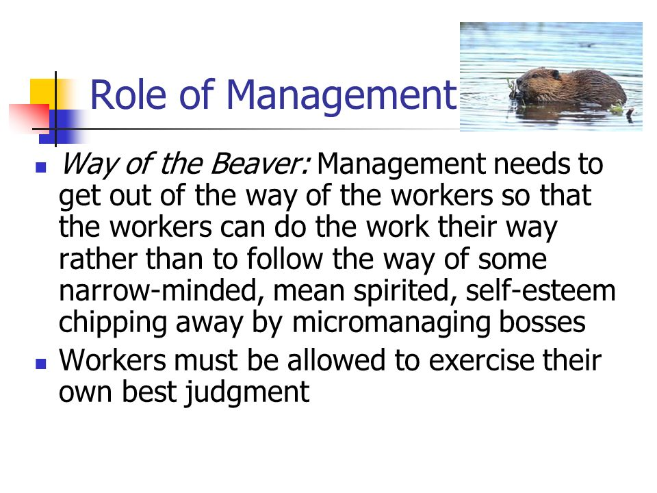 Role of Management Way of the Beaver: Management needs to get out of the way of the workers so that the workers can do the work their way rather than to follow the way of some narrow-minded, mean spirited, self-esteem chipping away by micromanaging bosses Workers must be allowed to exercise their own best judgment