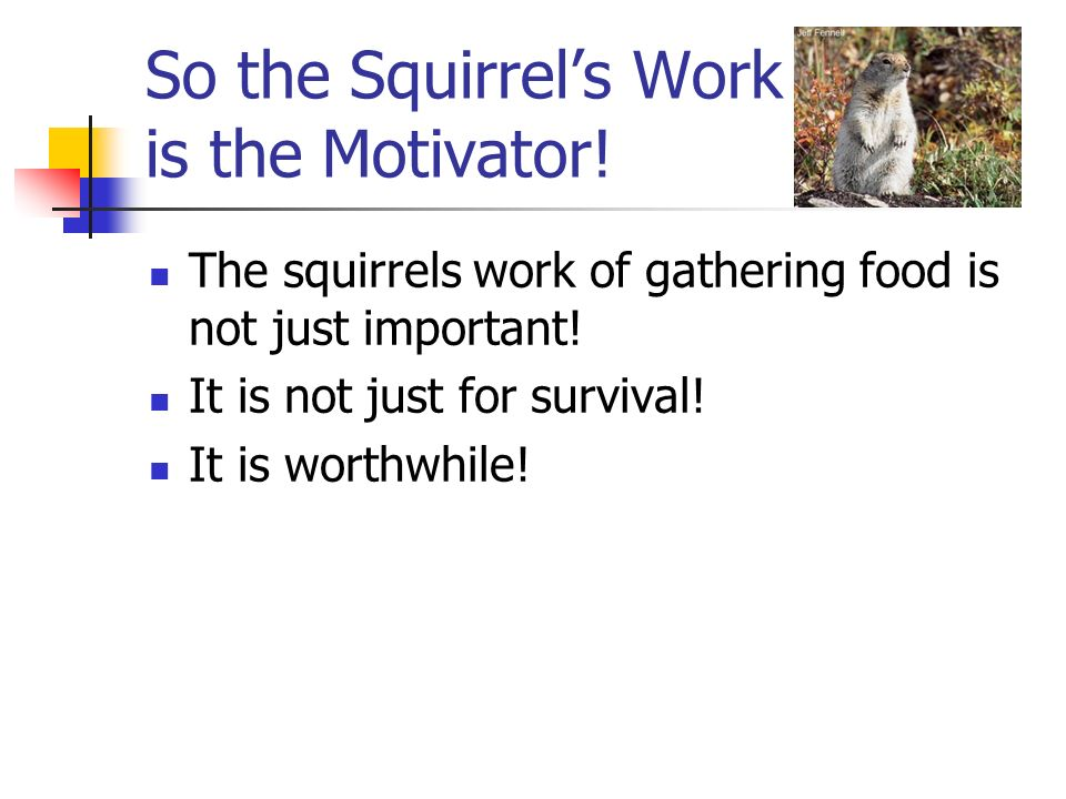 So the Squirrels Work is the Motivator.The squirrels work of gathering food is not just important.