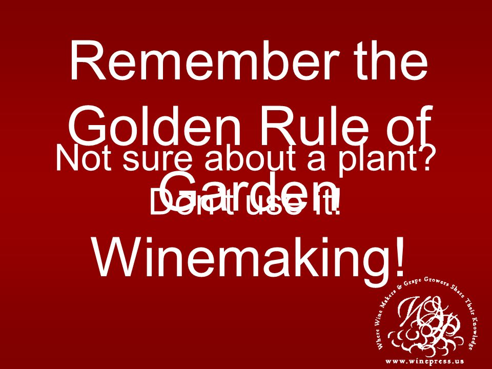Not sure about a plant? Dont use it! Remember the Golden Rule of Garden Winemaking!
