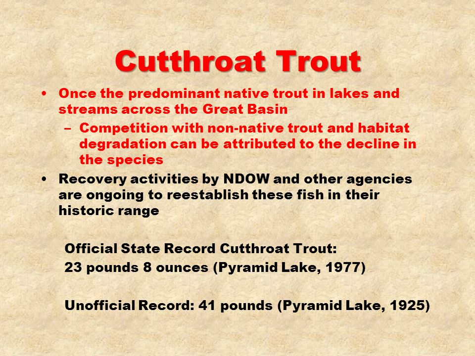 Cutthroat Trout Once the predominant native trout in lakes and streams across the Great Basin –Competition with non-native trout and habitat degradati