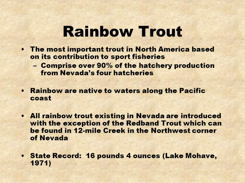 Rainbow Trout The most important trout in North America based on its contribution to sport fisheries –Comprise over 90% of the hatchery production fro