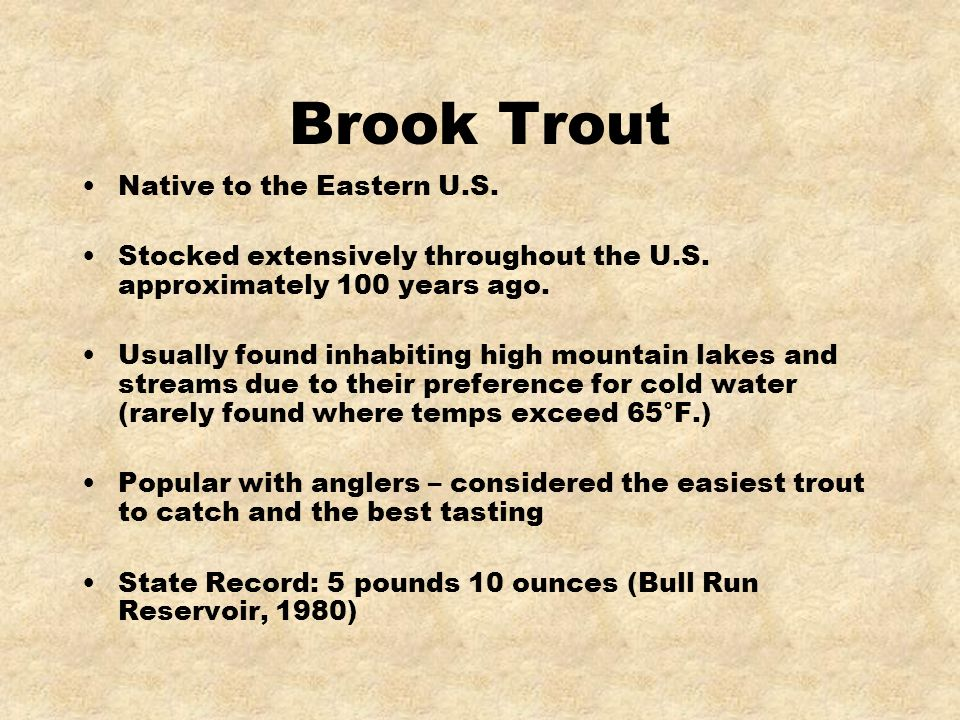 Brook Trout Native to the Eastern U.S. Stocked extensively throughout the U.S. approximately 100 years ago. Usually found inhabiting high mountain lak