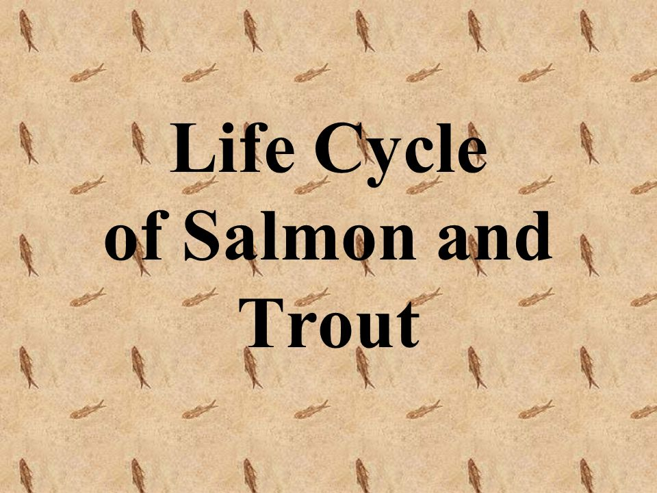 Life Cycle of Salmon and Trout