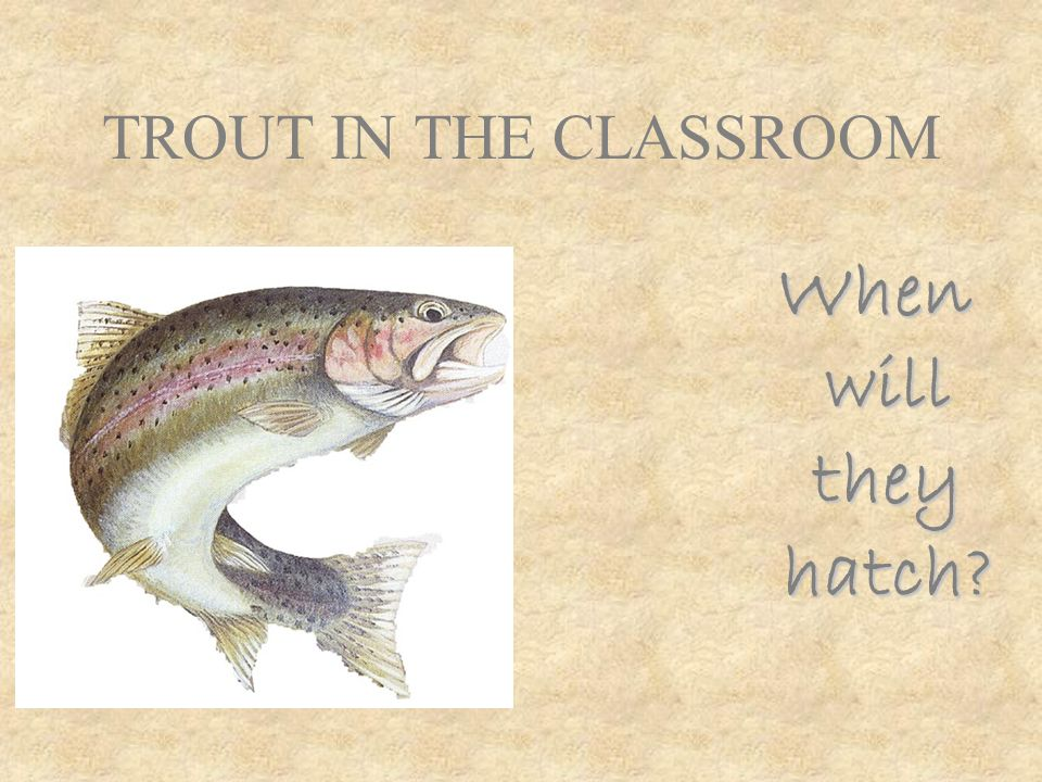 TROUT IN THE CLASSROOM When will they hatch?