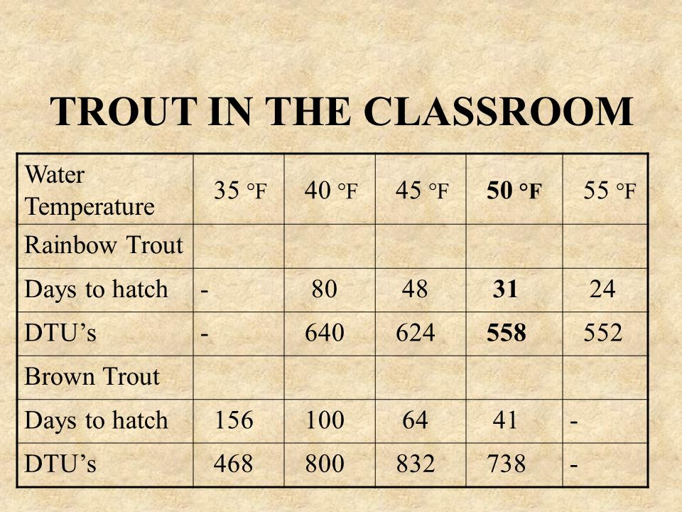 TROUT IN THE CLASSROOM Water Temperature 35 °F 40 °F 45 °F 50 °F 55 °F Rainbow Trout Days to hatch- 80 48 31 24 DTUs- 640 624 558 552 Brown Trout Days