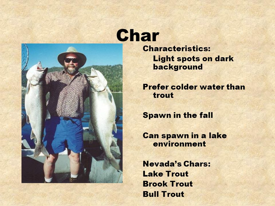 Char Characteristics: Light spots on dark background Prefer colder water than trout Spawn in the fall Can spawn in a lake environment Nevadas Chars: L