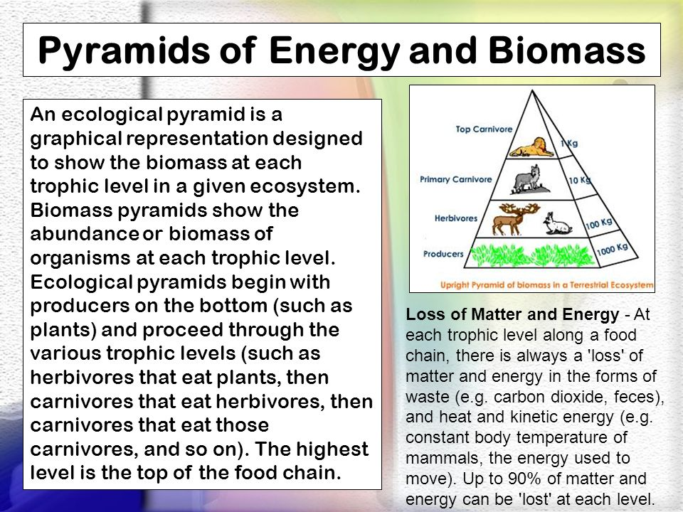 Pyramids of Energy and Biomass An ecological pyramid is a graphical representation designed to show the biomass at each trophic level in a given ecosy