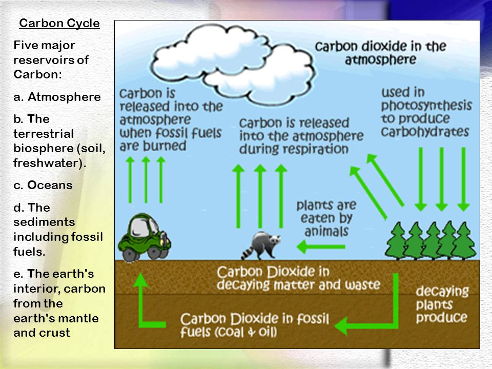 Carbon Cycle Five major reservoirs of Carbon: a. Atmosphere b. The terrestrial biosphere (soil, freshwater). c. Oceans d. The sediments including foss