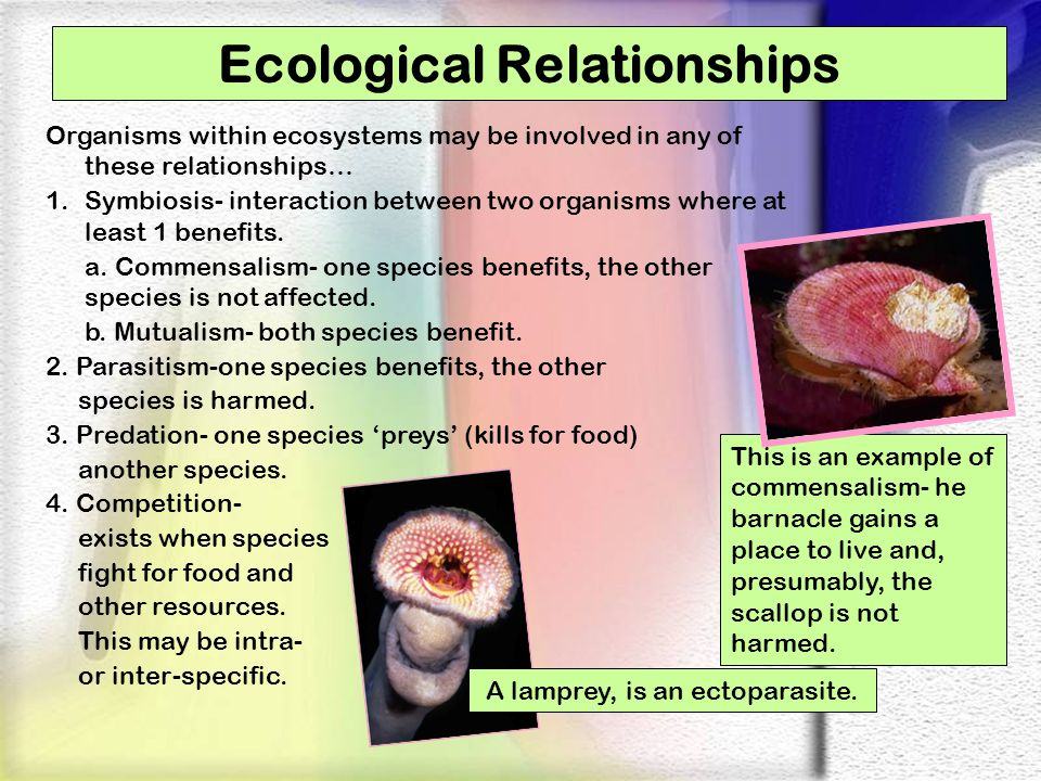 Ecological Relationships Organisms within ecosystems may be involved in any of these relationships… 1.Symbiosis- interaction between two organisms whe