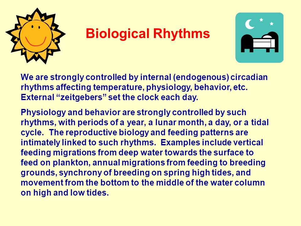 Biological Rhythms We are strongly controlled by internal (endogenous) circadian rhythms affecting temperature, physiology, behavior, etc. External ze