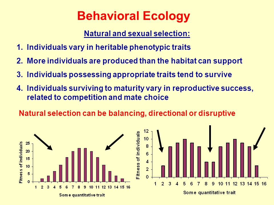 Behavioral Ecology Natural and sexual selection: 1.Individuals vary in heritable phenotypic traits 2.More individuals are produced than the habitat can support 3.Individuals possessing appropriate traits tend to survive 4.Individuals surviving to maturity vary in reproductive success, related to competition and mate choice Natural selection can be balancing, directional or disruptive