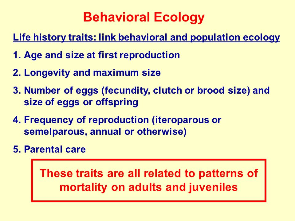 Behavioral Ecology Life history traits: link behavioral and population ecology 1.Age and size at first reproduction 2.Longevity and maximum size 3.Num