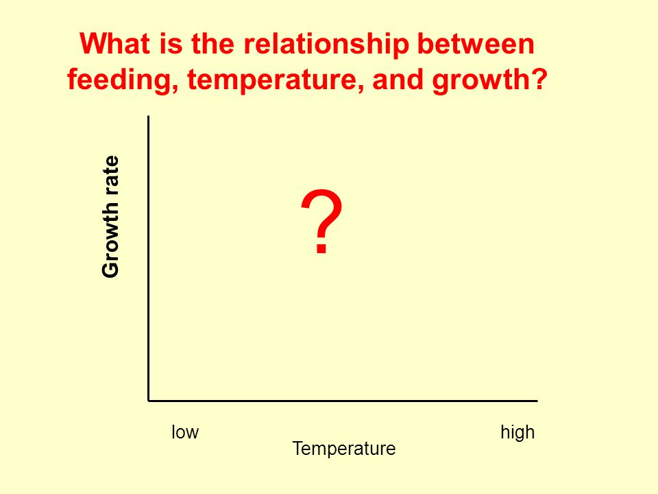 What is the relationship between feeding, temperature, and growth.