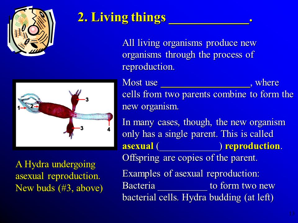 13 All living organisms produce new organisms through the process of reproduction. Most use __________________, where cells from two parents combine t