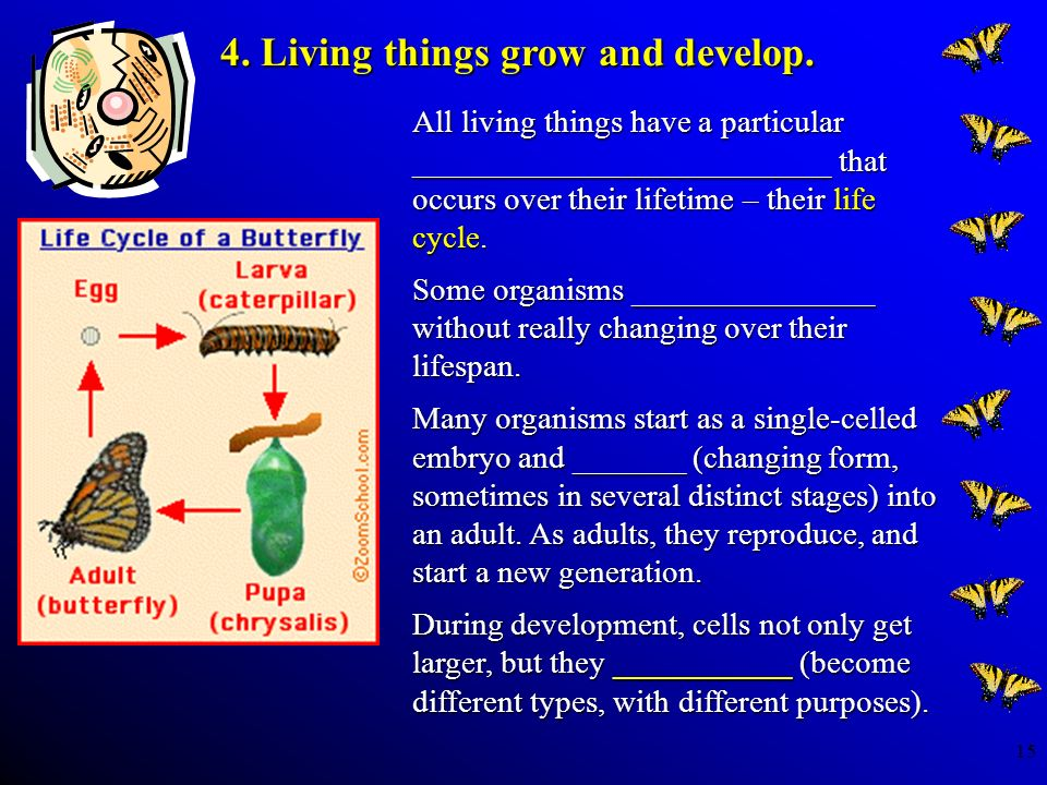 15 All living things have a particular __________________________ that occurs over their lifetime – their life cycle. Some organisms _______________ w