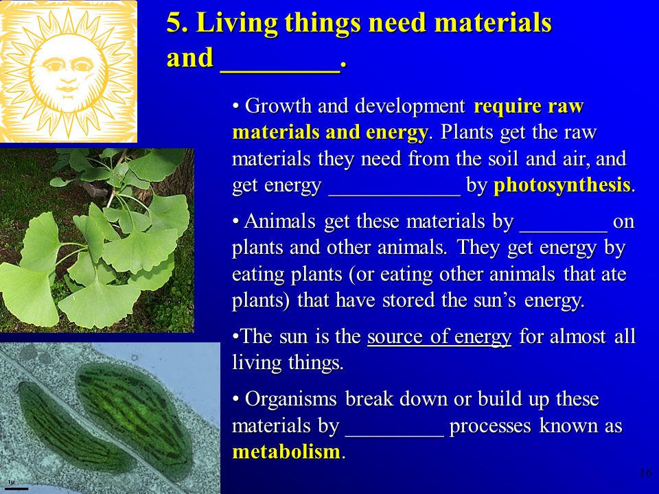 16 Growth and development require raw materials and energy. Plants get the raw materials they need from the soil and air, and get energy ____________