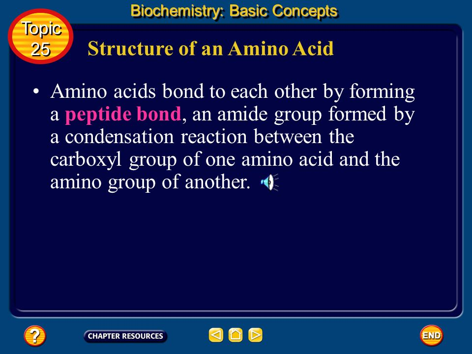 Structure of an Amino Acid Biochemistry: Basic Concepts Topic 25 Topic 25