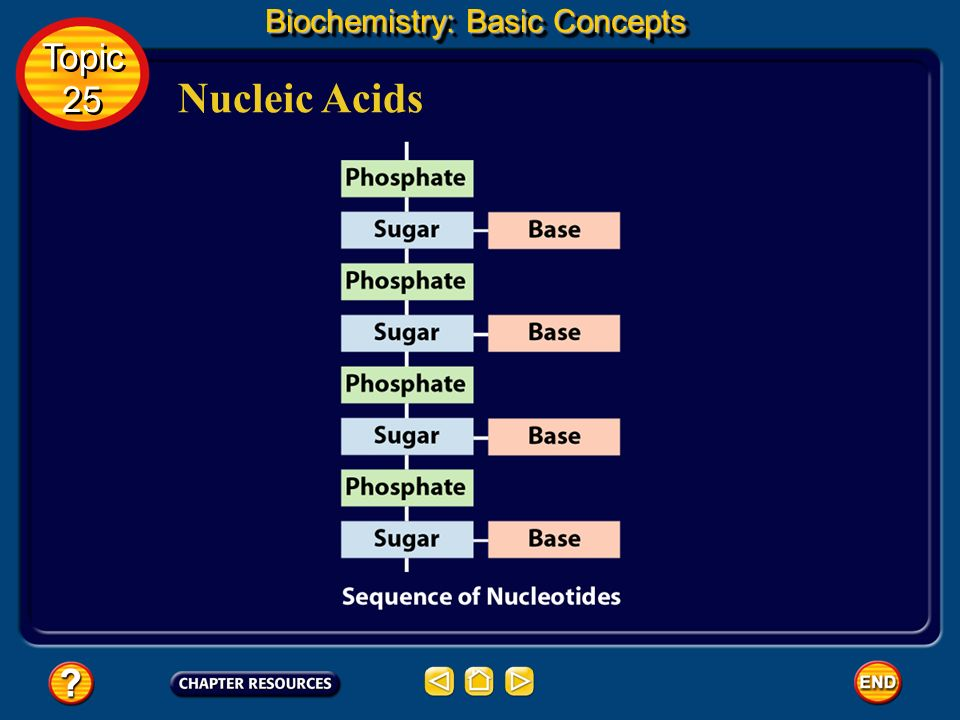 Nucleic Acids Biochemistry: Basic Concepts Topic 25 Topic 25