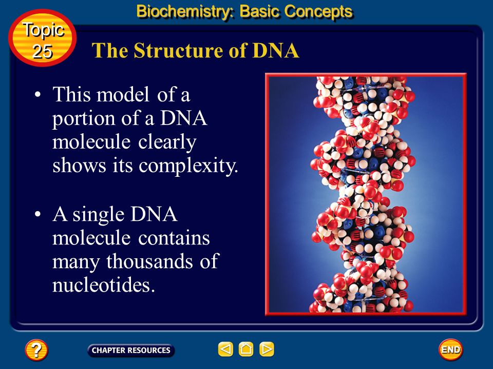 The common nucleic acids are DNA (deoxyribonucleic acid) and RNA (ribonucleic acid). Nucleic Acids Biochemistry: Basic Concepts These names reflect th