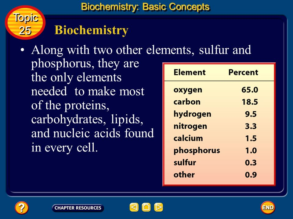 Biochemistry Biochemistry: Basic Concepts All four of these elements can form the strong covalent bonds found in organic molecules. Topic 25 Topic 25