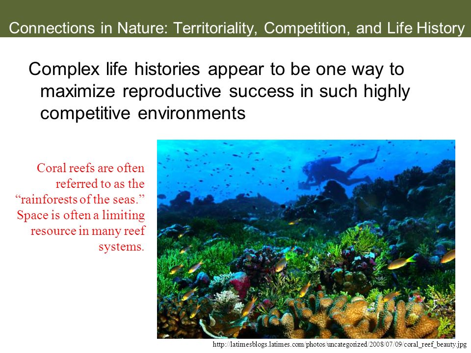 Connections in Nature: Territoriality, Competition, and Life History Complex life histories appear to be one way to maximize reproductive success in s