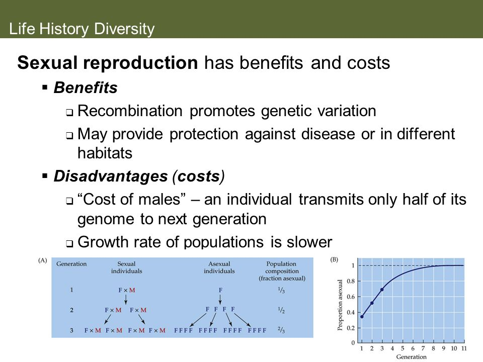 Life History Diversity Sexual reproduction has benefits and costs Benefits Recombination promotes genetic variation May provide protection against dis
