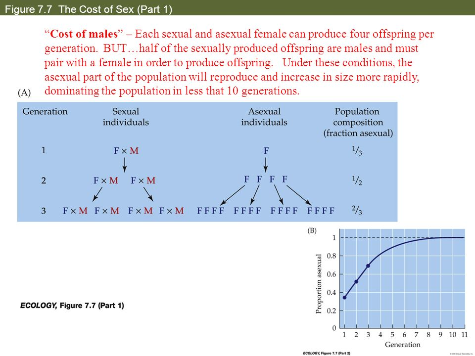 Figure 7.7 The Cost of Sex (Part 1) Cost of males – Each sexual and asexual female can produce four offspring per generation. BUT…half of the sexually