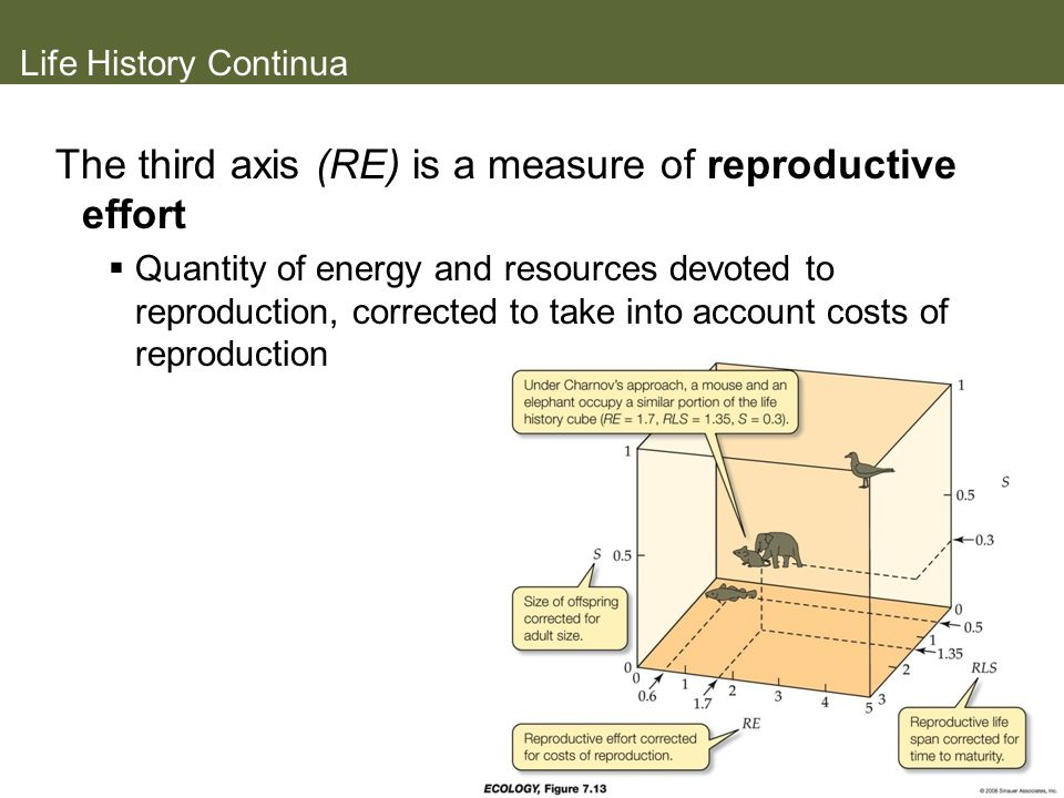 Life History Continua The third axis (RE) is a measure of reproductive effort Quantity of energy and resources devoted to reproduction, corrected to t
