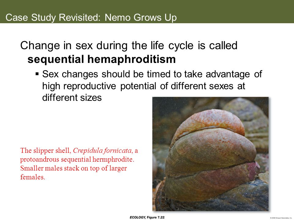 Case Study Revisited: Nemo Grows Up Change in sex during the life cycle is called sequential hemaphroditism Sex changes should be timed to take advant