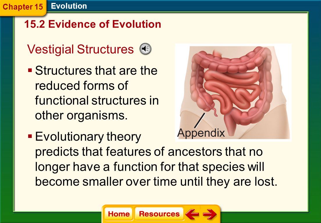 Evolution Derived traits are newly evolved features, such as feathers, that do not appear in the fossils of common ancestors. Ancestral traits are mor