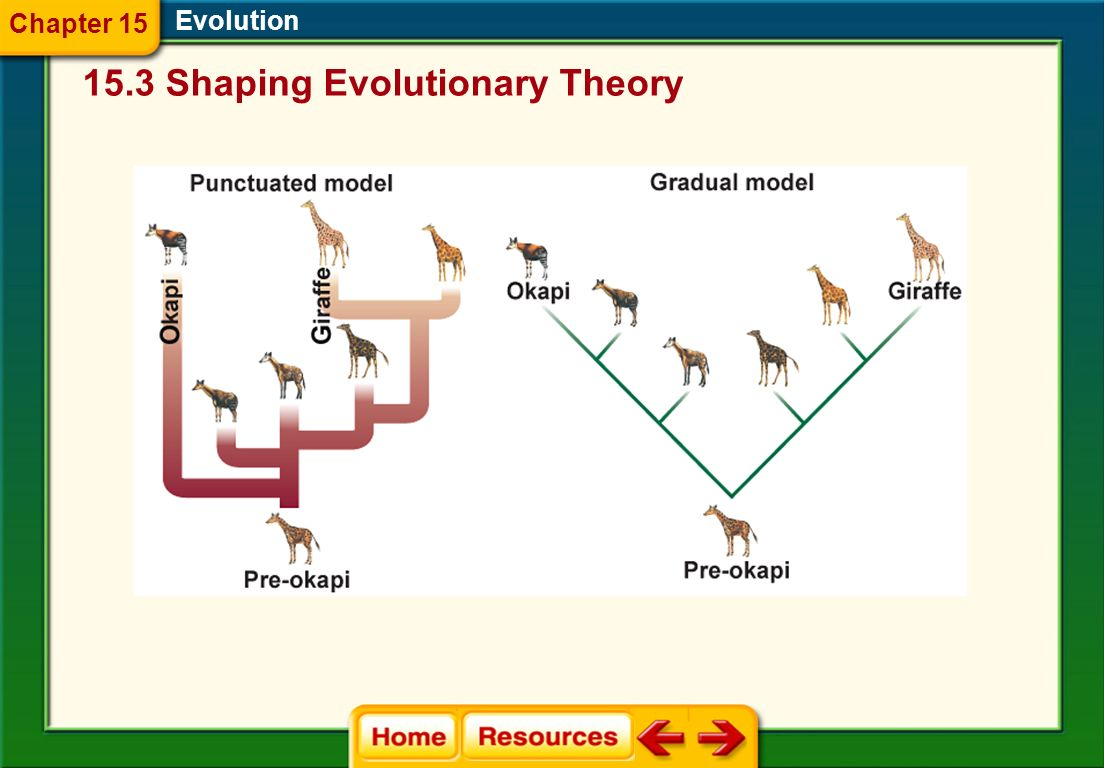 Evolution Rate of Speciation Evolution proceeds in small, gradual steps according to a theory called gradualism. Punctuated equilibrium explains rapid