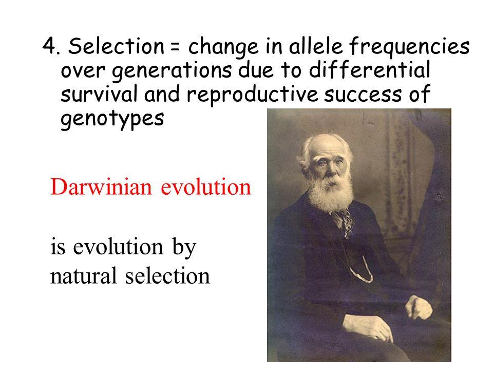 3. Genetic drift =stochastic shifts in allele frequencies in small populations Wilson & Bossert, 1971