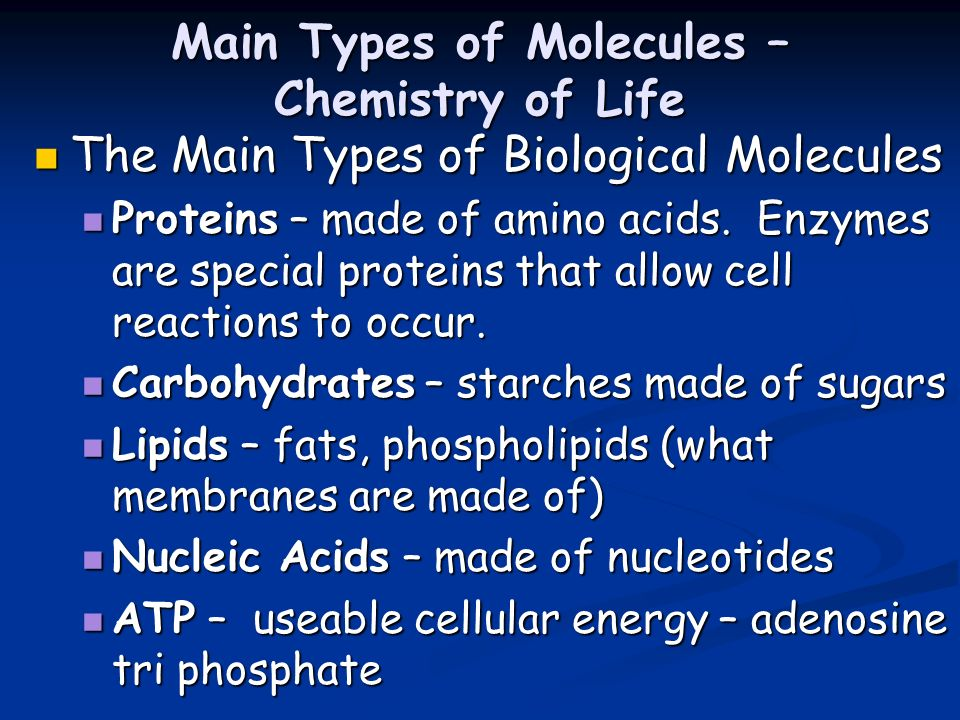 Main Types of Molecules – Chemistry of Life The Main Types of Biological Molecules The Main Types of Biological Molecules Proteins – made of amino aci