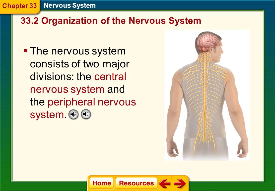 Nervous System Chapter 33