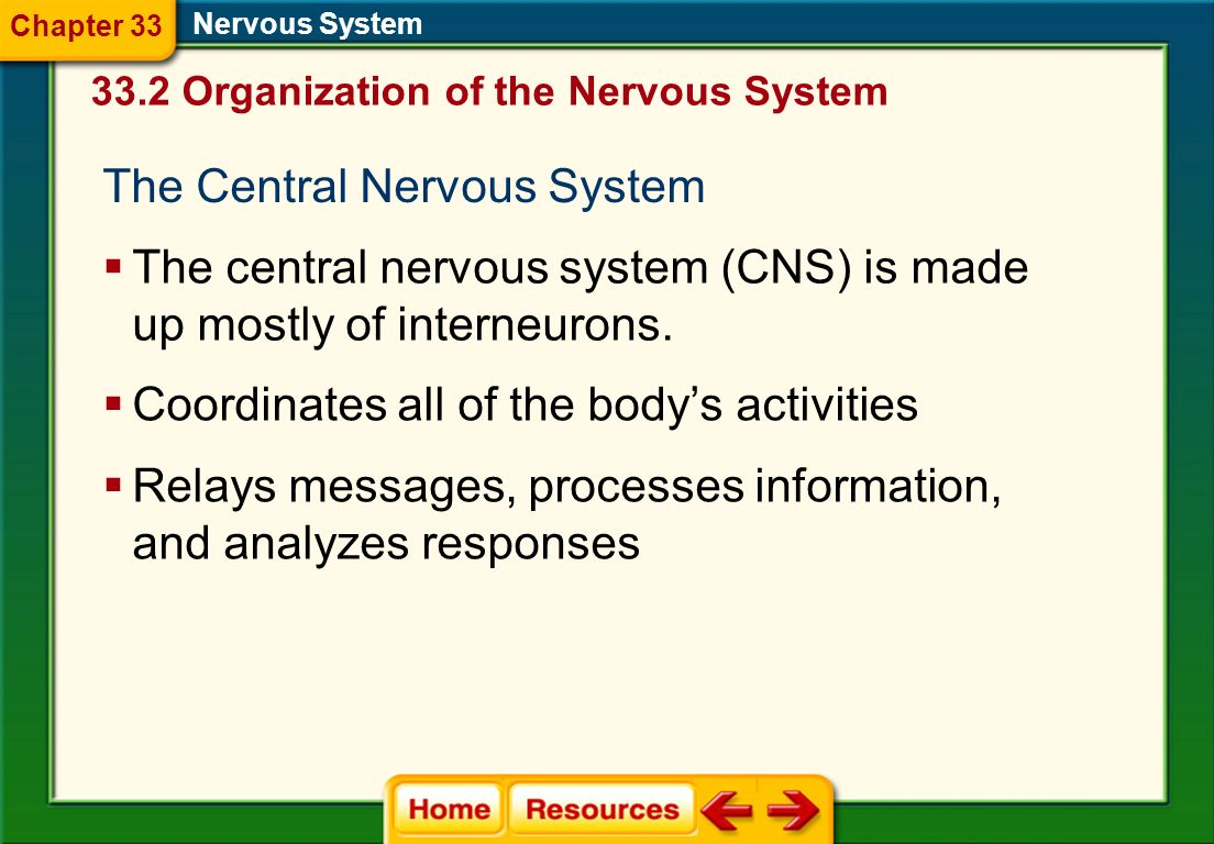The nervous system consists of two major divisions: the central nervous system and the peripheral nervous system. 33.2 Organization of the Nervous Sys