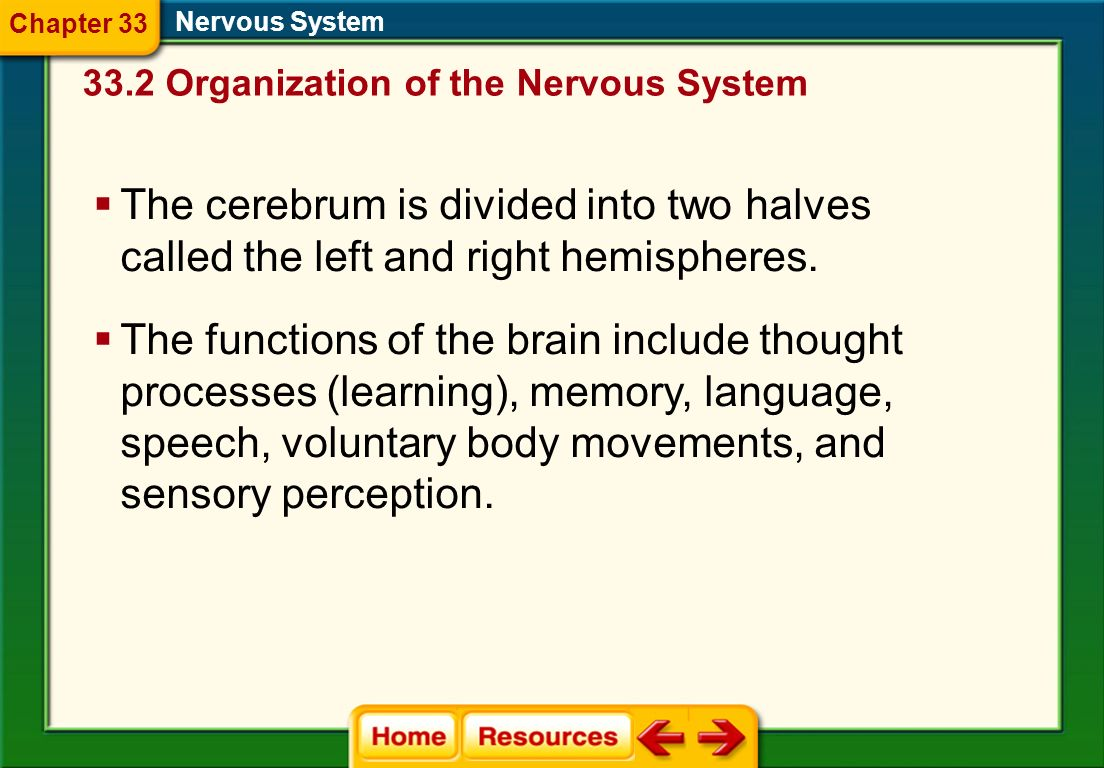 The Brain Nervous System The brain is sometimes called the control center of the entire body. Divided into the cerebrum, the cerebellum, and the brain