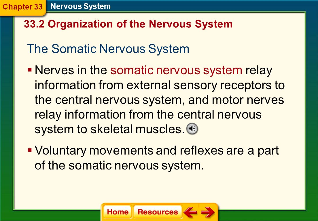 The Peripheral Nervous System Nervous System A nerve is a bundle of axons and may contain sensory and motor neurons. The peripheral nervous system (PN