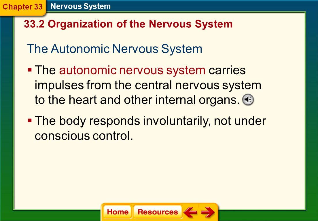 The Somatic Nervous System Nervous System Nerves in the somatic nervous system relay information from external sensory receptors to the central nervou