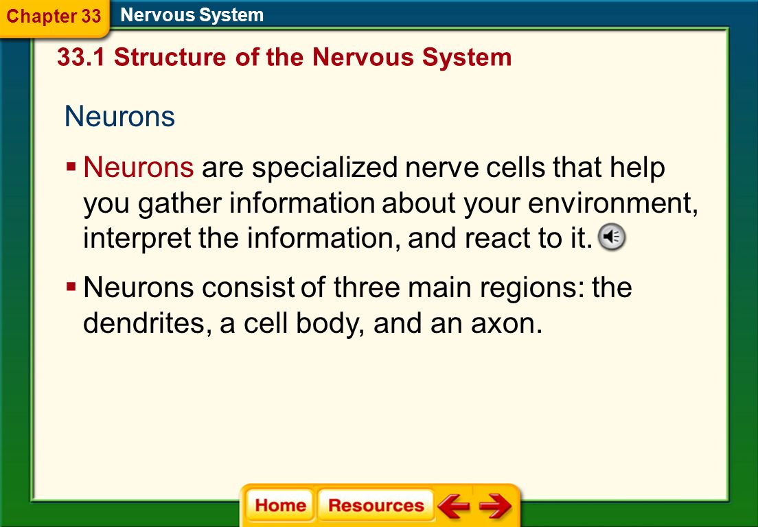 Click on a lesson name to select. Chapter 33 Nervous System Section 1: Structure of the Nervous System Section 2: Organization of the Nervous System S