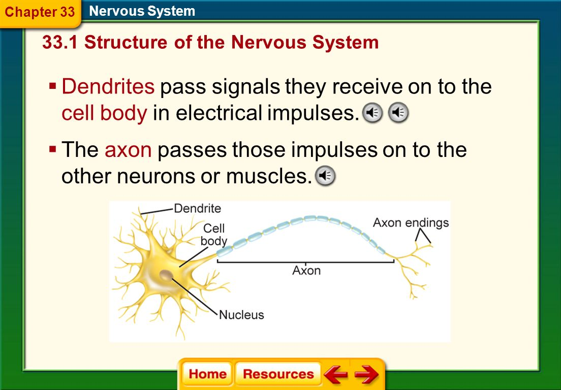 Neurons Neurons are specialized nerve cells that help you gather information about your environment, interpret the information, and react to it. 33.1