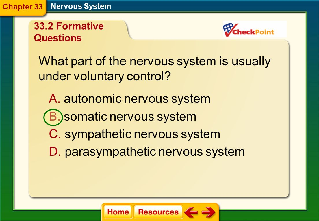 Nervous System What is a nerve? A. a bundle of axons B. a chain of neurons C. a sensory synapse D. a series of impulses 33.2 Formative Questions Chapt