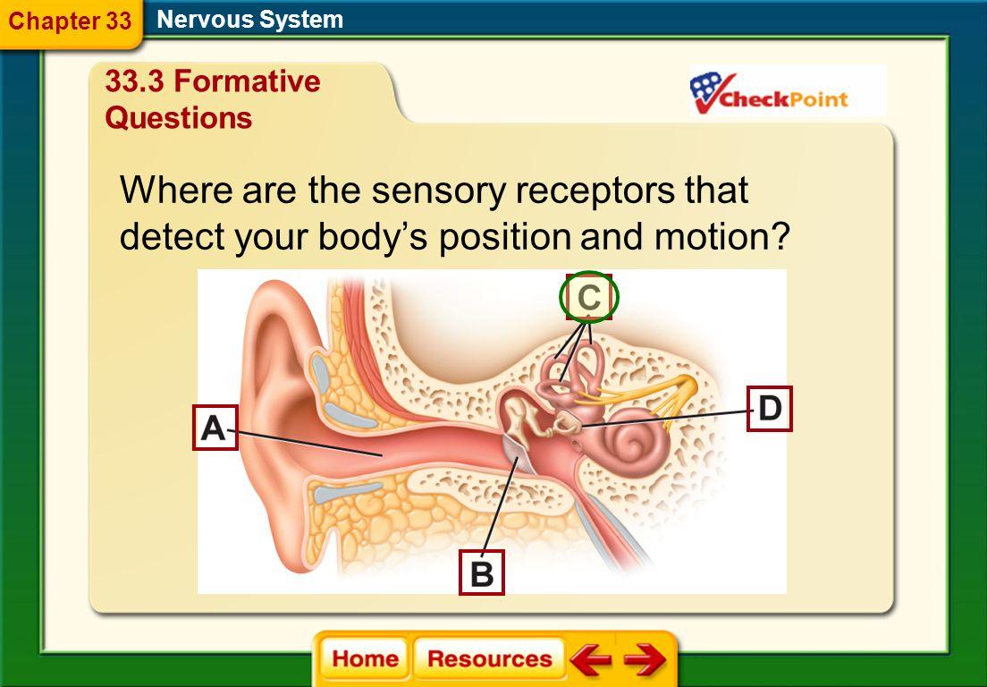 Biology question, nerve impulses.?