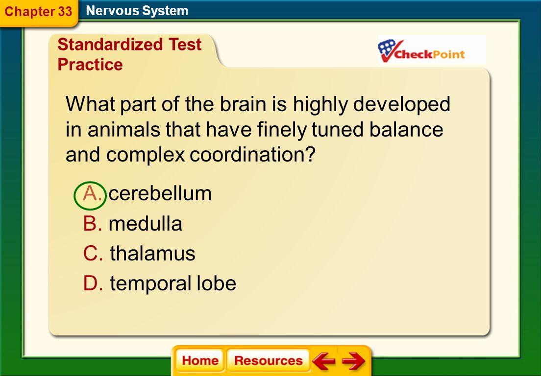 Which word best describes the hypothalamus? Nervous System A. processor B. reflexor C. regulator D. transmitter Standardized Test Practice Chapter 33