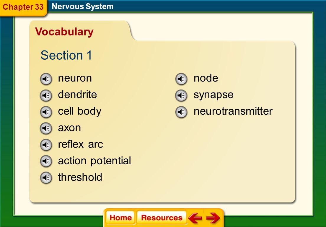 Image Bank Nervous System Chapter 33