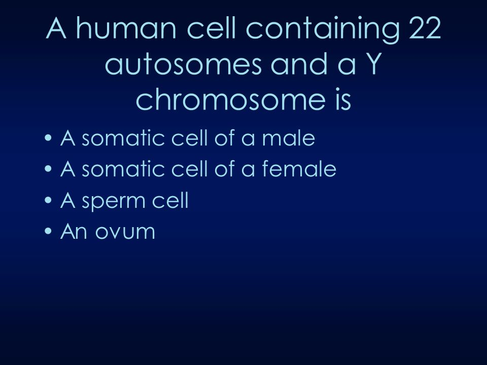 A human cell containing 22 autosomes and a Y chromosome is A somatic cell of a male A somatic cell of a female A sperm cell An ovum